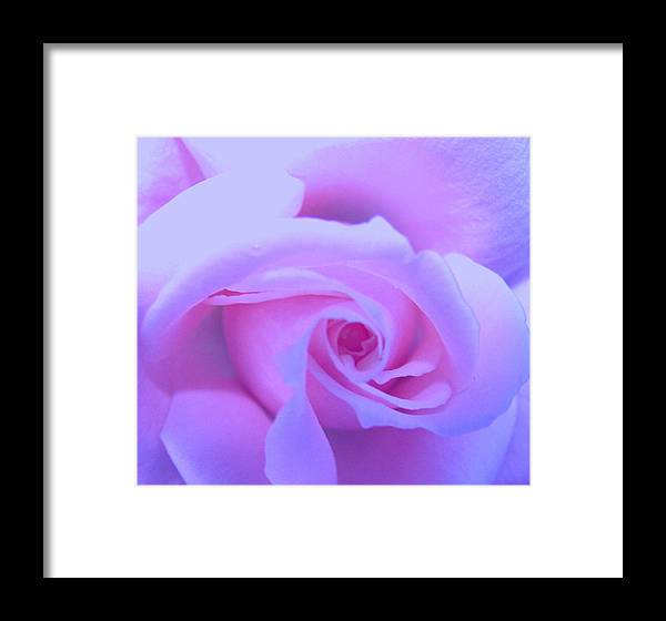 Roses Framed Print featuring the photograph My Soul by Vijay Sharon Govender