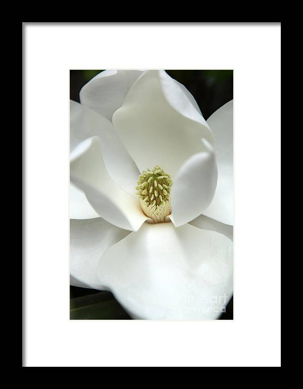 Magnolia Framed Print featuring the photograph Mysteriously by Amanda Barcon