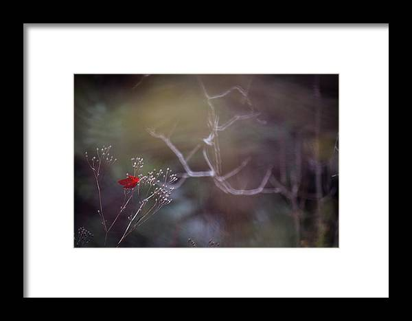Landscape Framed Print featuring the photograph Mystery by Nadia Chiu