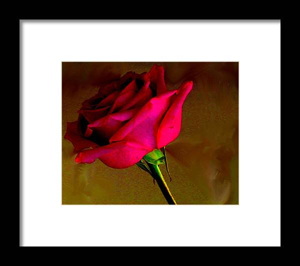 Rose Framed Print featuring the photograph Mystical Rose by Ian MacDonald