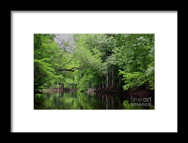 Withlacoochee River Framed Print featuring the photograph Mystical Withlacoochee River by Barbara Bowen