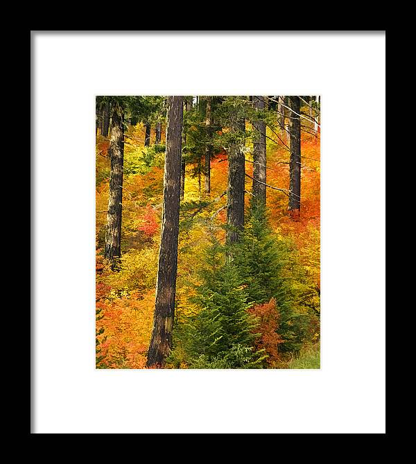 Nw Autumn Framed Print featuring the photograph N W Autumn by Wes and Dotty Weber