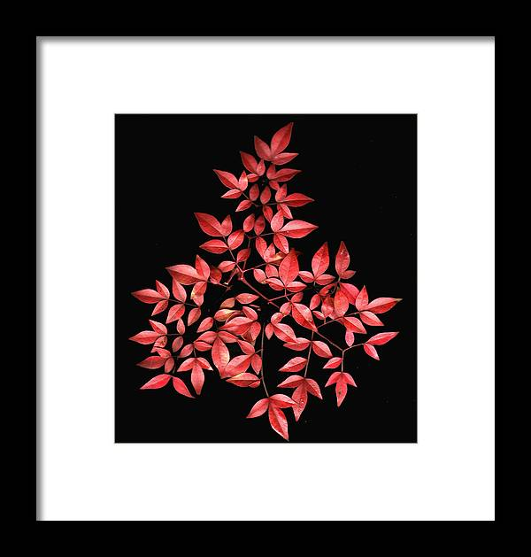 Leaves Framed Print featuring the photograph Nadina Branch by Wayne Potrafka