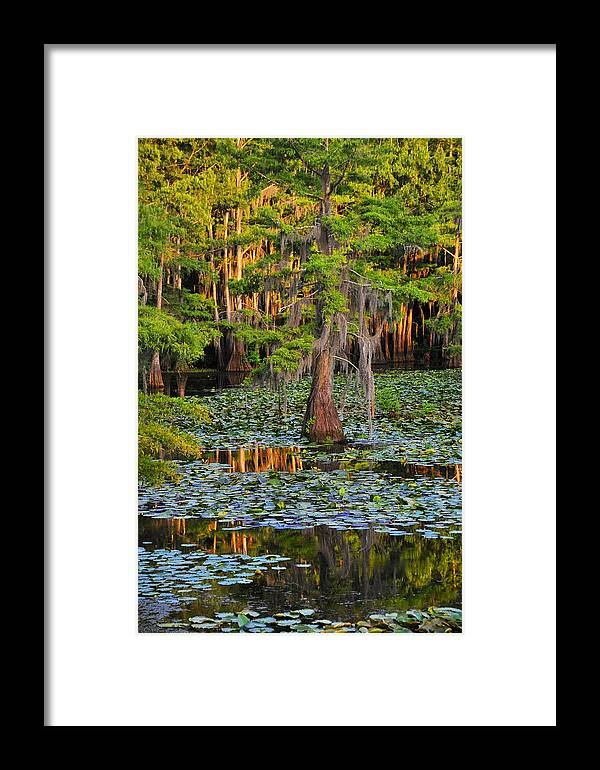 Bog Framed Print featuring the photograph Naked by Skip Hunt