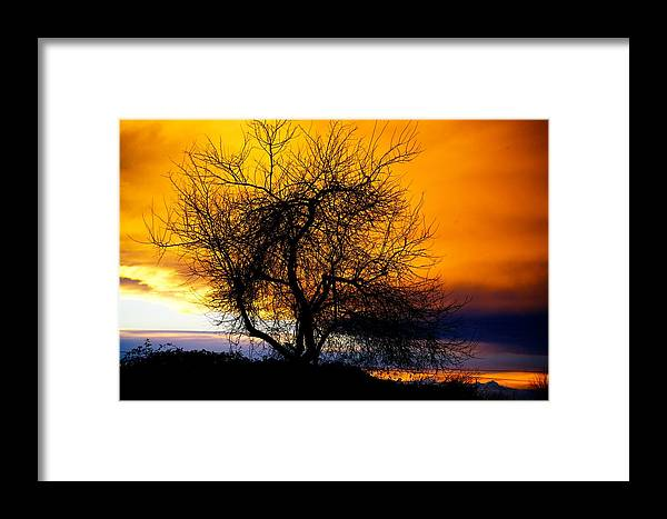 Tree Framed Print featuring the photograph Naked Tree by Paul Kloschinsky