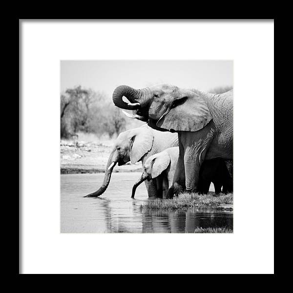 Namibia Elephants Framed Print By Nina Papiorek