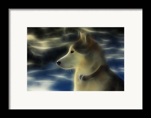 Dog Framed Print featuring the photograph Nanuk Husky Fractal by Marjorie Imbeau