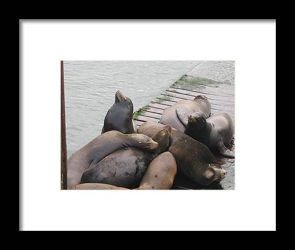 Framed Print featuring the digital art Nap Time by Barb Morton