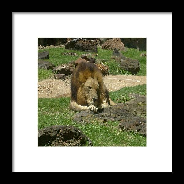 Nature Framed Print featuring the photograph Nap Time by Carla Fionnagain
