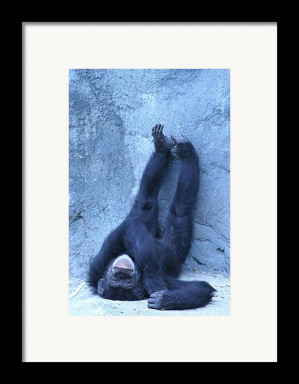 Monkey Framed Print featuring the photograph Nap Time by Linda Russell