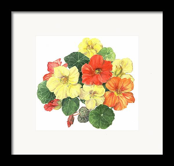 Flower Framed Print featuring the painting Nasturtiums by Maureen Carter