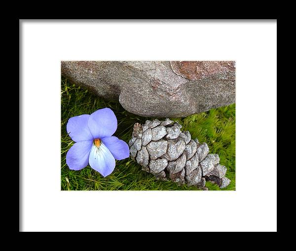 Kathy Bucari Framed Print featuring the photograph Natural Beauty by Kathy Bucari