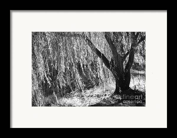 Contemorary Art Framed Print featuring the photograph Natural Screen by Gerlinde Keating - Galleria GK Keating Associates Inc
