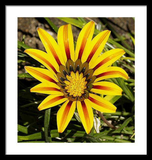 Decor Framed Print featuring the photograph Natural Sun Shine by Ron Kizer