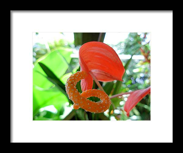 Flowers Framed Print featuring the photograph Naturally Curly by Amanda Vouglas