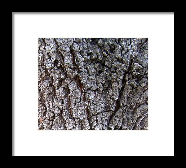 Texture Framed Print featuring the photograph Nature Abstract by Madeleine Prochazka