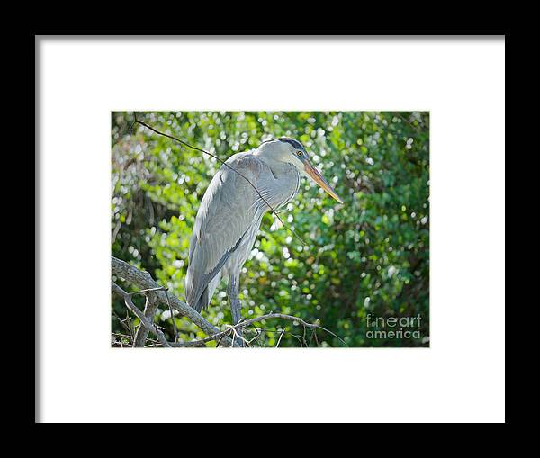 Everglades Framed Print featuring the photograph Nature At Its Best by Judy Kay