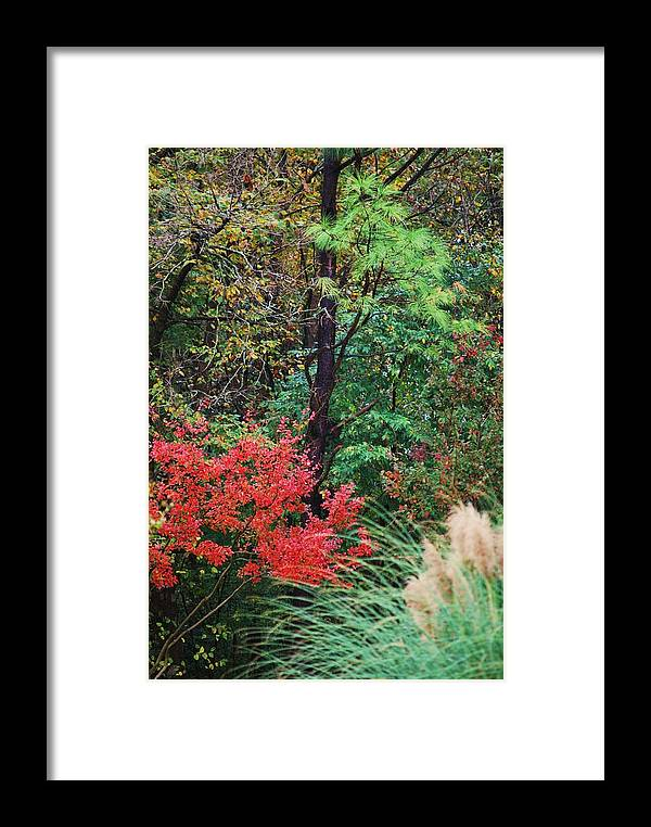 Trees Framed Print featuring the photograph Nature In All Her Beauty by Trudi Southerland