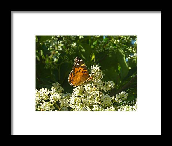 Nature Framed Print featuring the photograph Nature In The Wild - A Light In The Darkness by Lucyna A M Green
