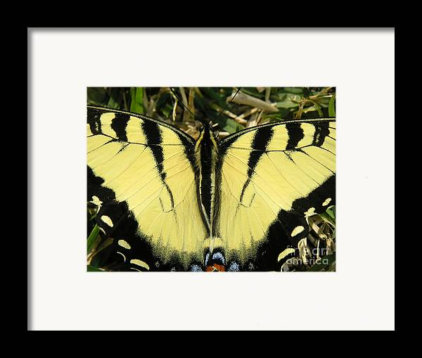 Nature Framed Print featuring the photograph Nature In The Wild - A Natural Painting by Lucyna A M Green