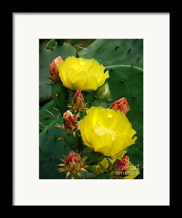 Nature Framed Print featuring the photograph Nature In The Wild - A Prickly Backdrop by Lucyna A M Green