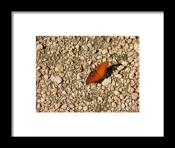 Nature Framed Print featuring the photograph Nature In The Wild - A Splash Of Color On The Rocks by Lucyna A M Green
