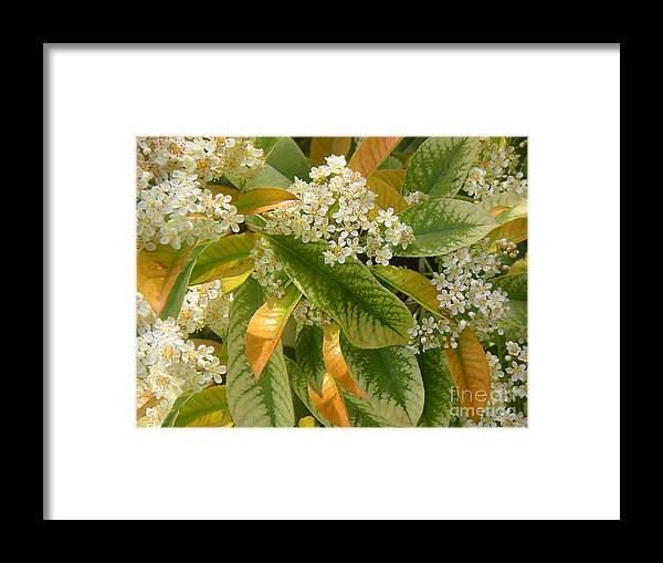 Nature Framed Print featuring the photograph Nature In The Wild - A Summer's Day by Lucyna A M Green