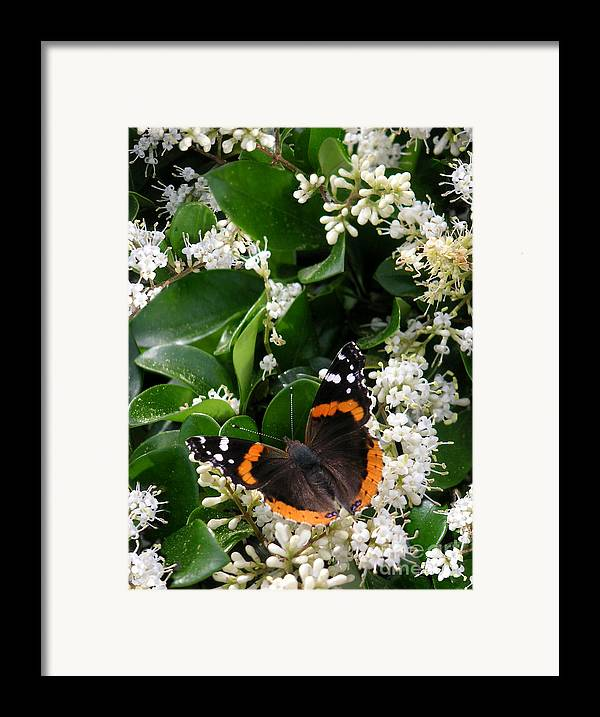 Nature Framed Print featuring the photograph Nature In The Wild - A Sweet Stop by Lucyna A M Green