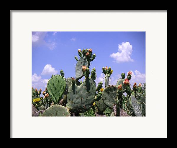 Nature Framed Print featuring the photograph Nature In The Wild - Against A Big Sky by Lucyna A M Green