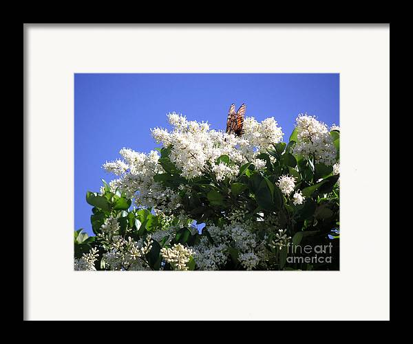 Nature Framed Print featuring the photograph Nature In The Wild - Bathing In Blooms by Lucyna A M Green