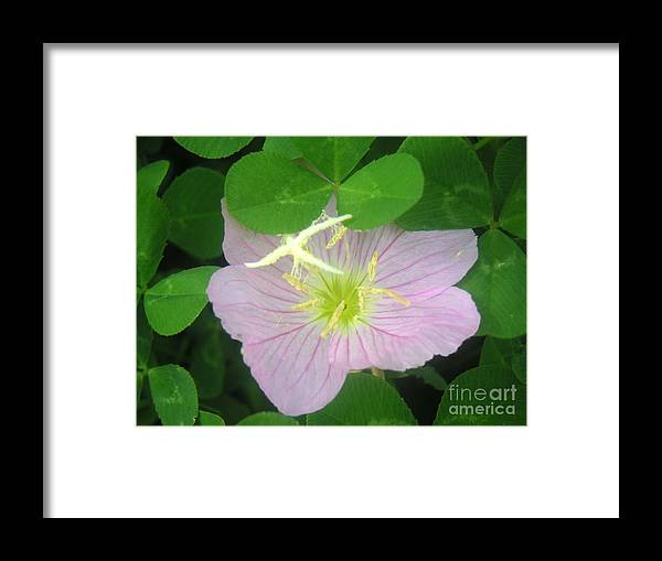Nature Framed Print featuring the photograph Nature In The Wild - Bathing In Clover by Lucyna A M Green