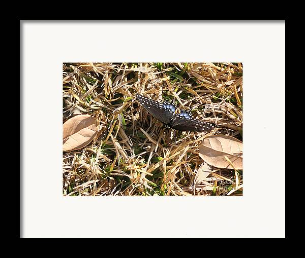 Nature Framed Print featuring the photograph Nature In The Wild - Beauty Camouflaged by Lucyna A M Green