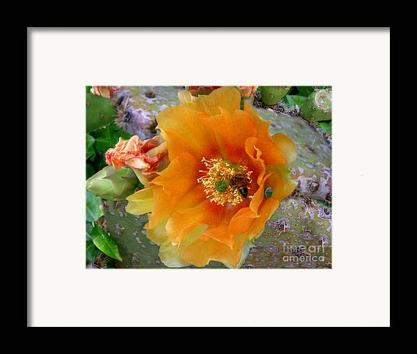 Nature Framed Print featuring the photograph Nature In The Wild - Cactus Honey by Lucyna A M Green