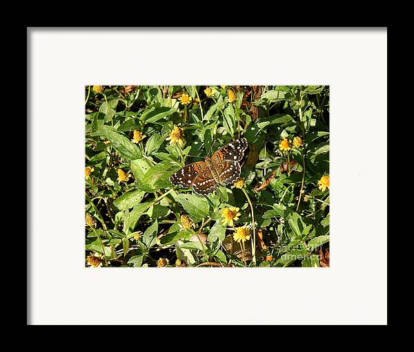 Nature Framed Print featuring the photograph Nature In The Wild - Colors Of Autumn by Lucyna A M Green