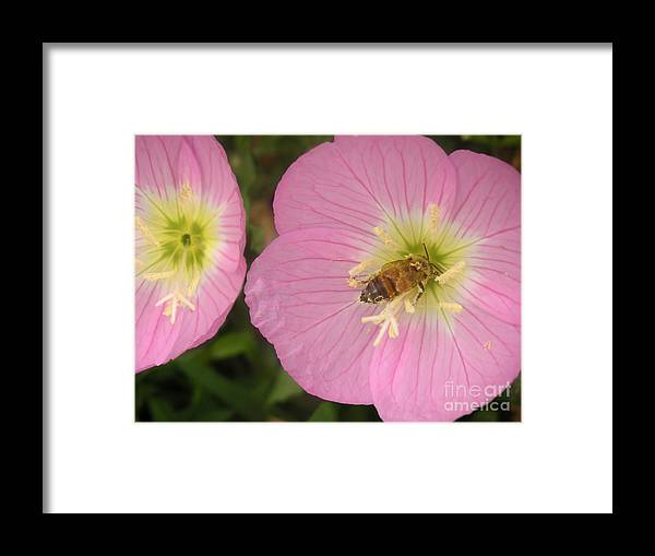 Nature Framed Print featuring the photograph Nature In The Wild - Dipping Right In by Lucyna A M Green