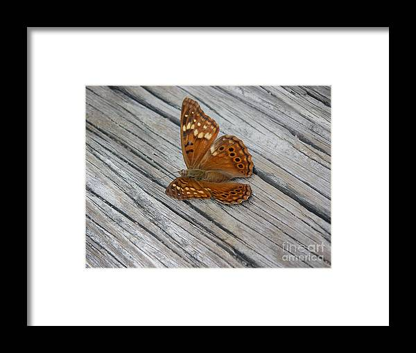 Nature Framed Print featuring the photograph Nature In The Wild - Fall Colors by Lucyna A M Green