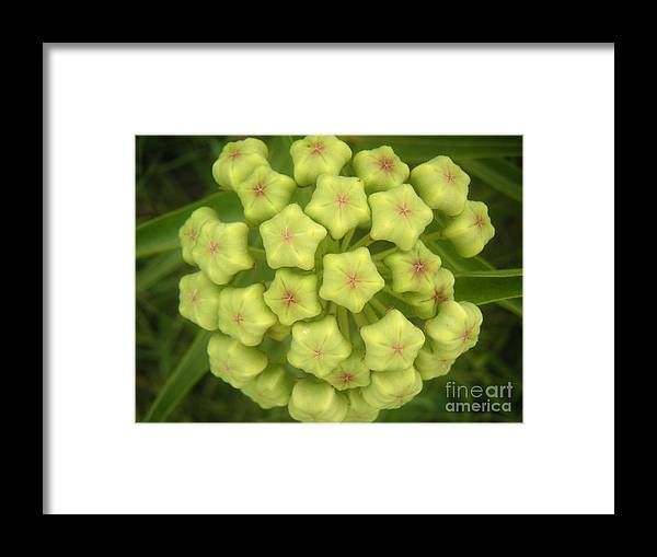 Nature Framed Print featuring the photograph Nature In The Wild - Flowering Wildly by Lucyna A M Green