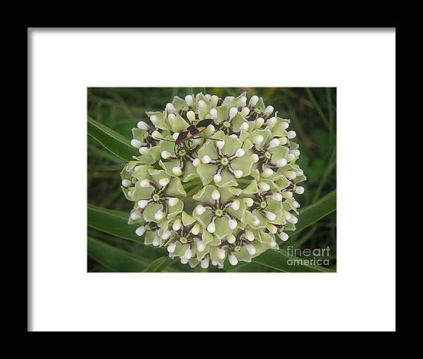 Nature Framed Print featuring the photograph Nature In The Wild - In Its Own World by Lucyna A M Green