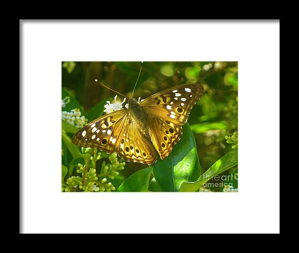 Nature Framed Print featuring the photograph Nature In The Wild - Kaleidoscope Of Color by Lucyna A M Green