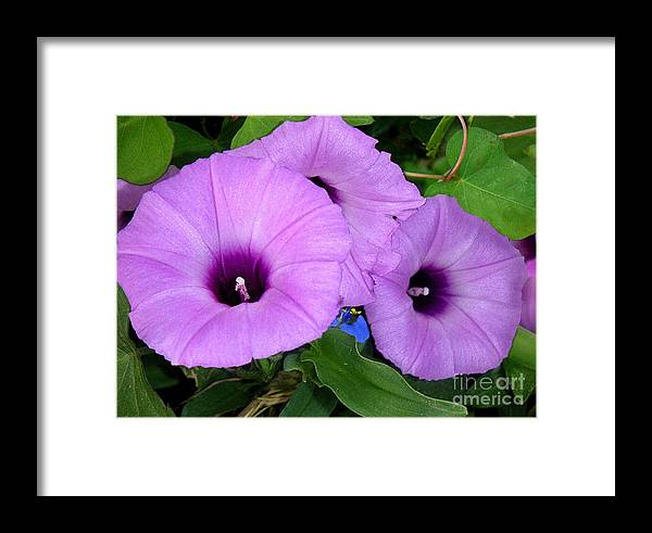 Nature Framed Print featuring the photograph Nature In The Wild - Morning Bells by Lucyna A M Green