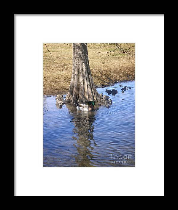 Nature Framed Print featuring the photograph Nature In The Wild - Soaking Up The Sun by Lucyna A M Green