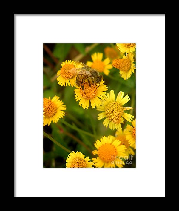 Nature Framed Print featuring the photograph Nature In The Wild - The Nectar Company by Lucyna A M Green
