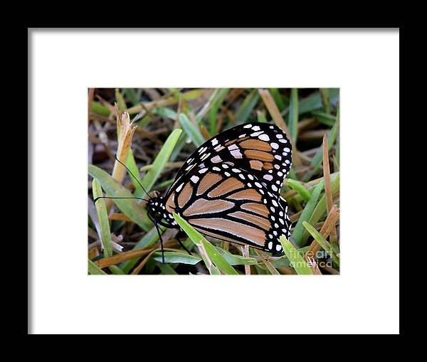 Nature Framed Print featuring the photograph Nature In The Wild - Traveling Light by Lucyna A M Green