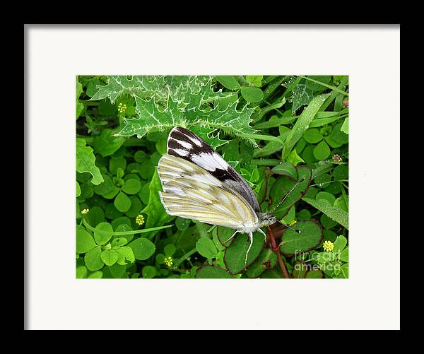 Nature Framed Print featuring the photograph Nature In The Wild - Visiting With The Greens by Lucyna A M Green
