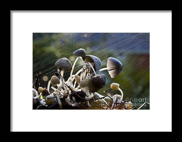 Mushrooms Rain Showers Umbrellas Nature Fungi Framed Print featuring the photograph Nature by Sheila Smart Fine Art Photography