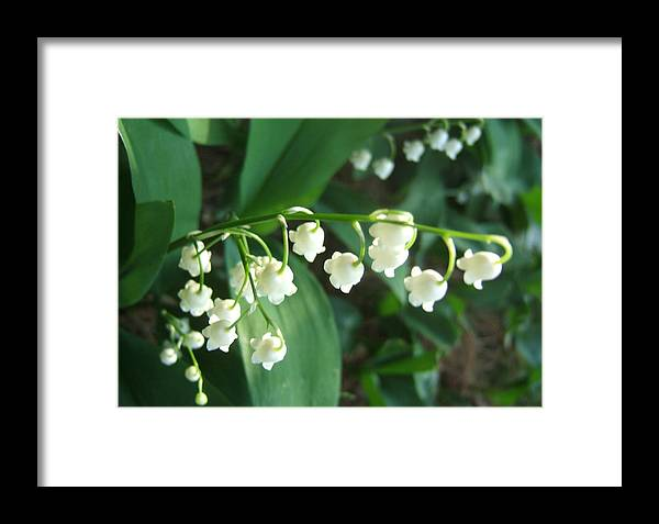 Flowers Florals Photo Nature Framed Print featuring the photograph Natures Bells by Lisa Roy