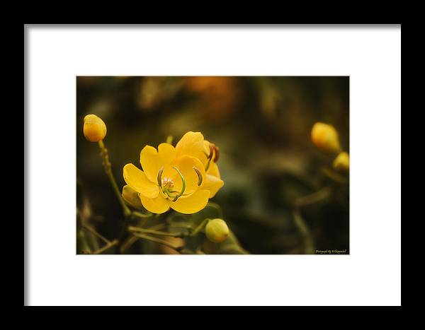 Flower Photography Framed Print featuring the photograph Natures Colours 001 by Kevin Chippindall