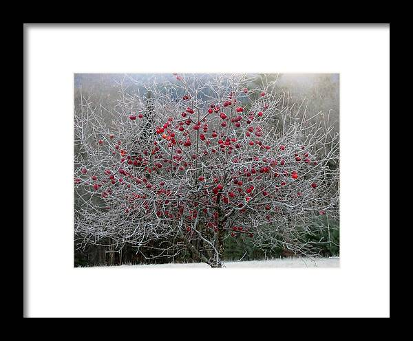 Apple Tree Framed Print featuring the photograph Nature's Decorations by Donna King