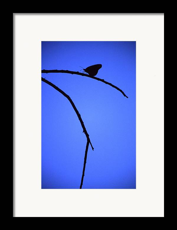 Nature Framed Print featuring the photograph Natures Elegance by Randy Oberg
