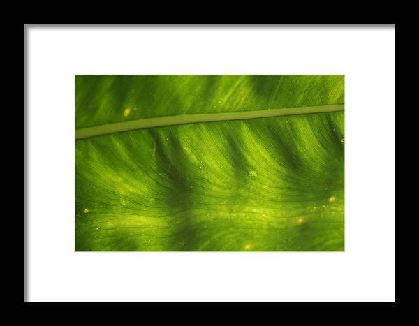 Botanical Framed Print featuring the photograph Nature's Fan by Allan E Dooley Jr